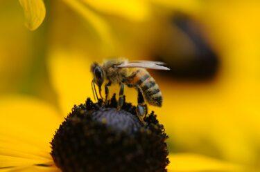 スズメバチのハチの巣をド素人が0円で駆除してみた(画像あり)